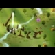 Civilizations Wars online game