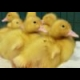 Ducklings Jigsaw online game
