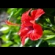 Flowers Jigsaw online game