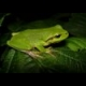 Frog Slider online game