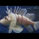 Lionfish Jigsaw online game