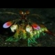 Mantis Shrimp Slider online game